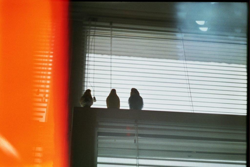 Can a bird get high