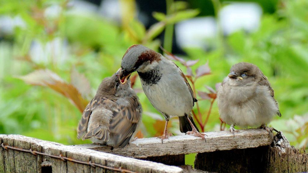 Do baby birds eat at night