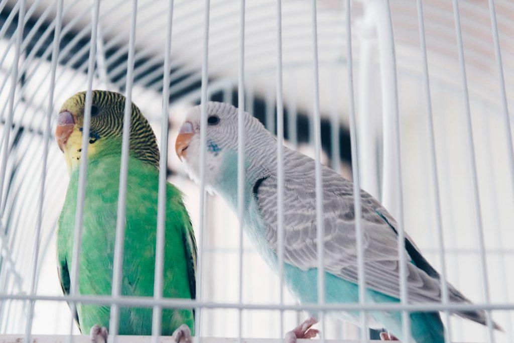 how to get rid of a pet bird