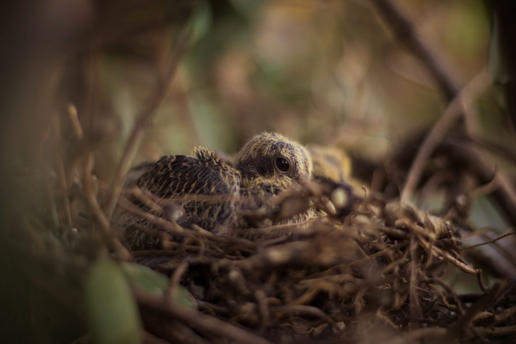 Can mother birds move their babies