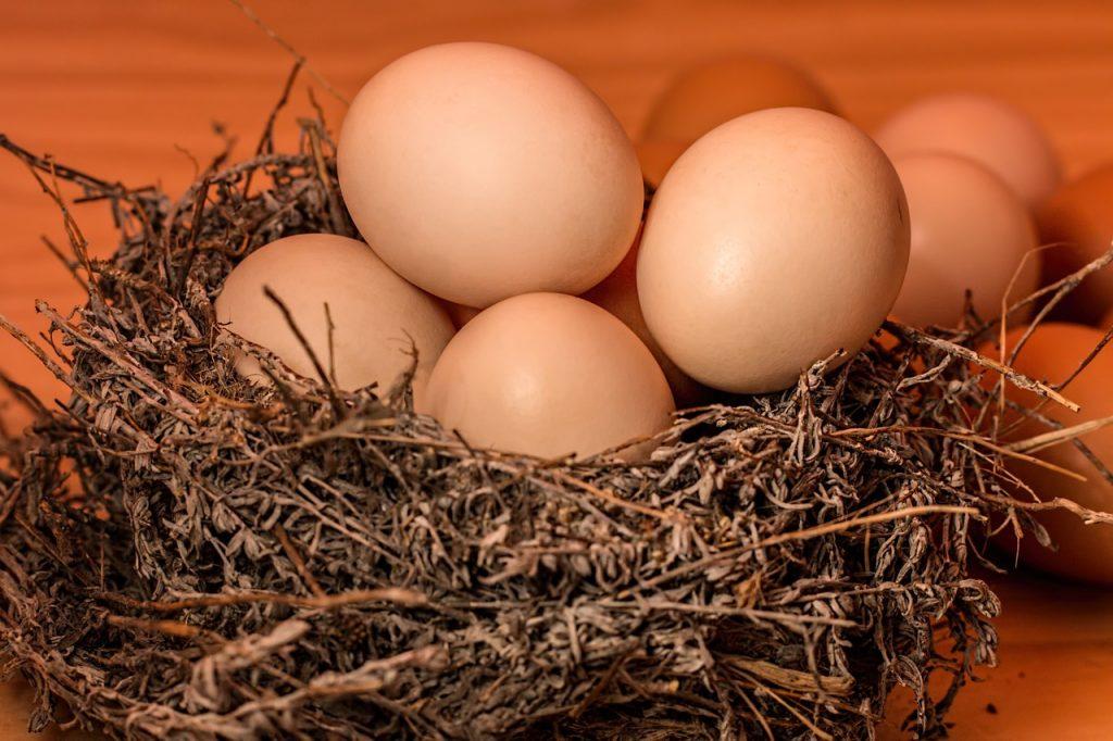 female budgie not sitting on eggs