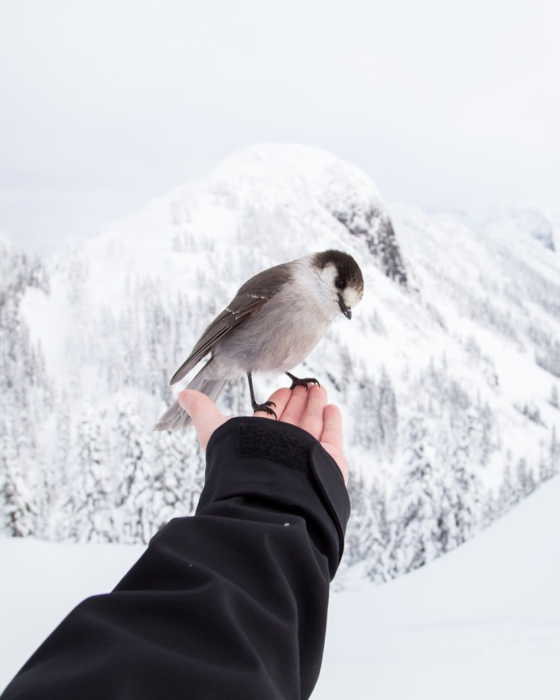 Where do birds sleep at night in the winter