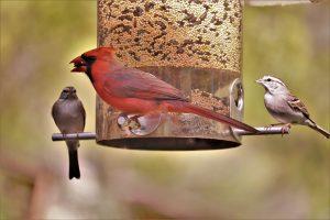 What happens if I stop feeding birds