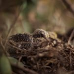 Do Baby Birds Eat At Night? (And What To Feed Them!)