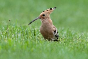 Are Birds Good For The Garden