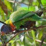 Can Parrots Eat Chicken Bones?