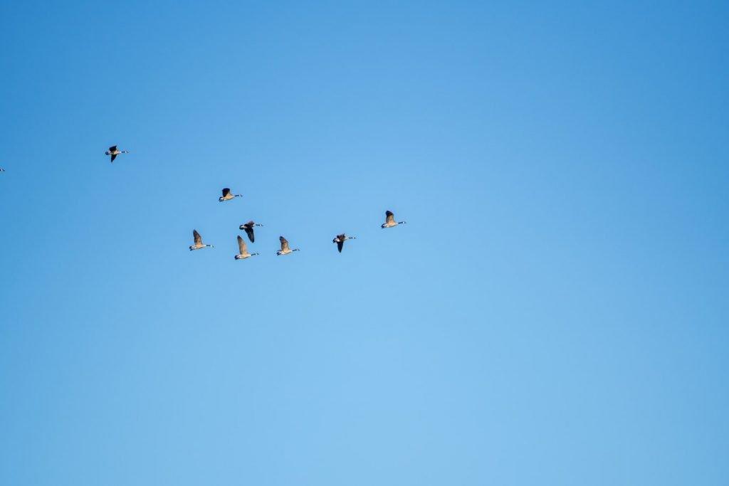 what season do birds fly south
