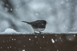 how to keep aviary birds warm in winter