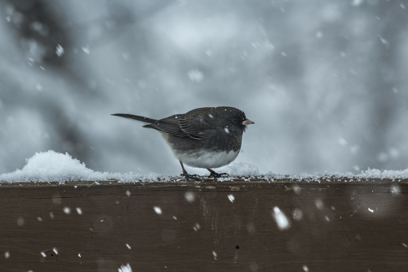 how to keep aviary birds warm in winter