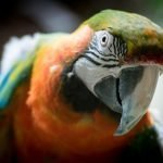 How To Get Rid Of A Pet Bird (And What Not To Do!)