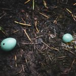 How Long Can A Bird Egg Live Without Warmth?
