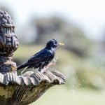 How To Improve Feather Quality In Birds (And What To Use!)