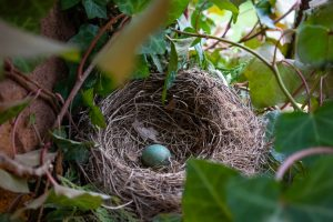 how to relocate a birds nest with eggs