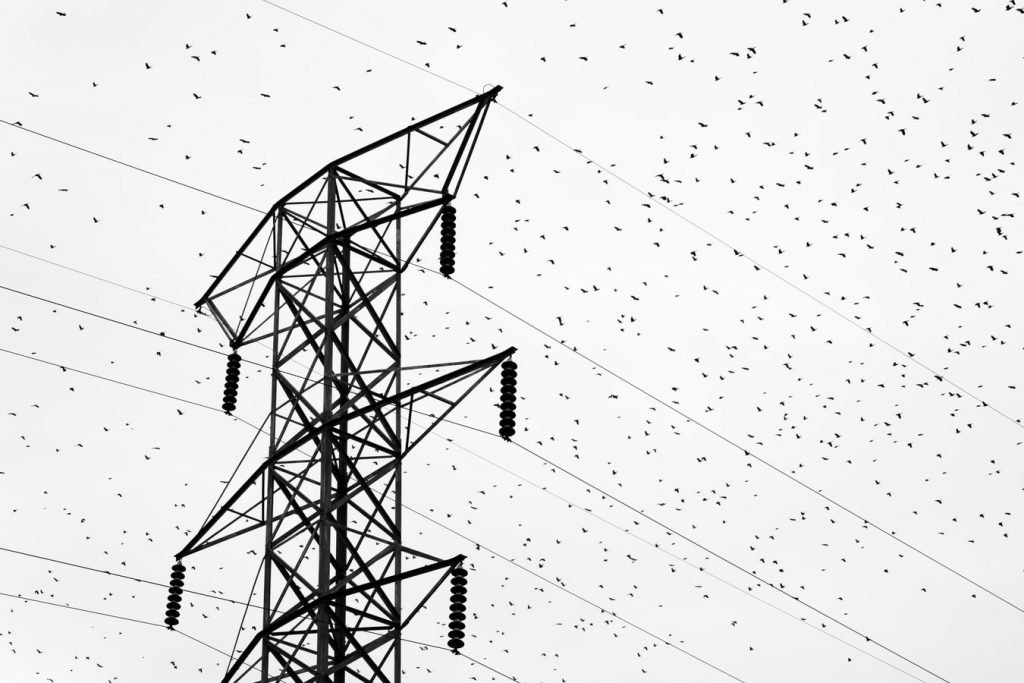Do birds sit on power lines for warmth