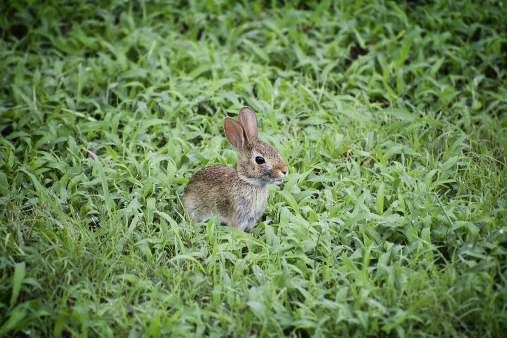 When do baby bunnies pee on their own