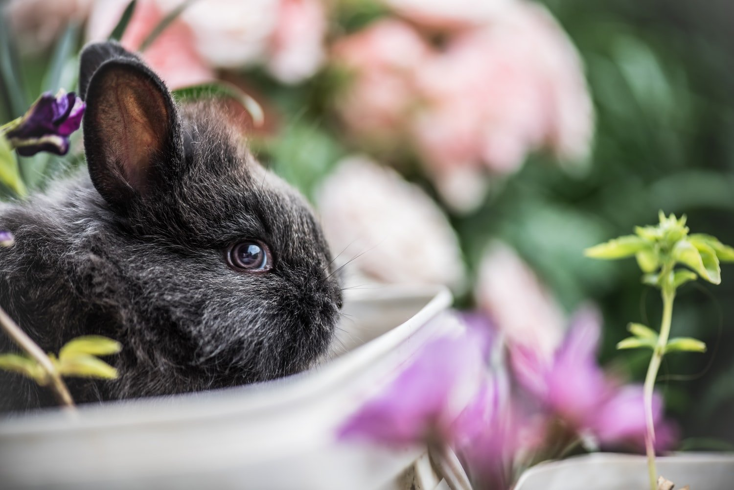 Why do rabbits move their bedding