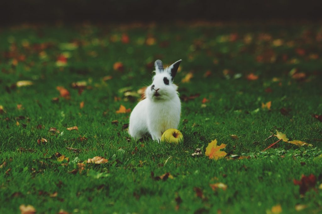 Do rabbits dig tunnels