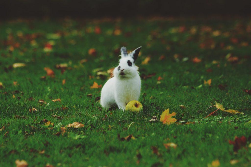 Can rabbits give birth days apart