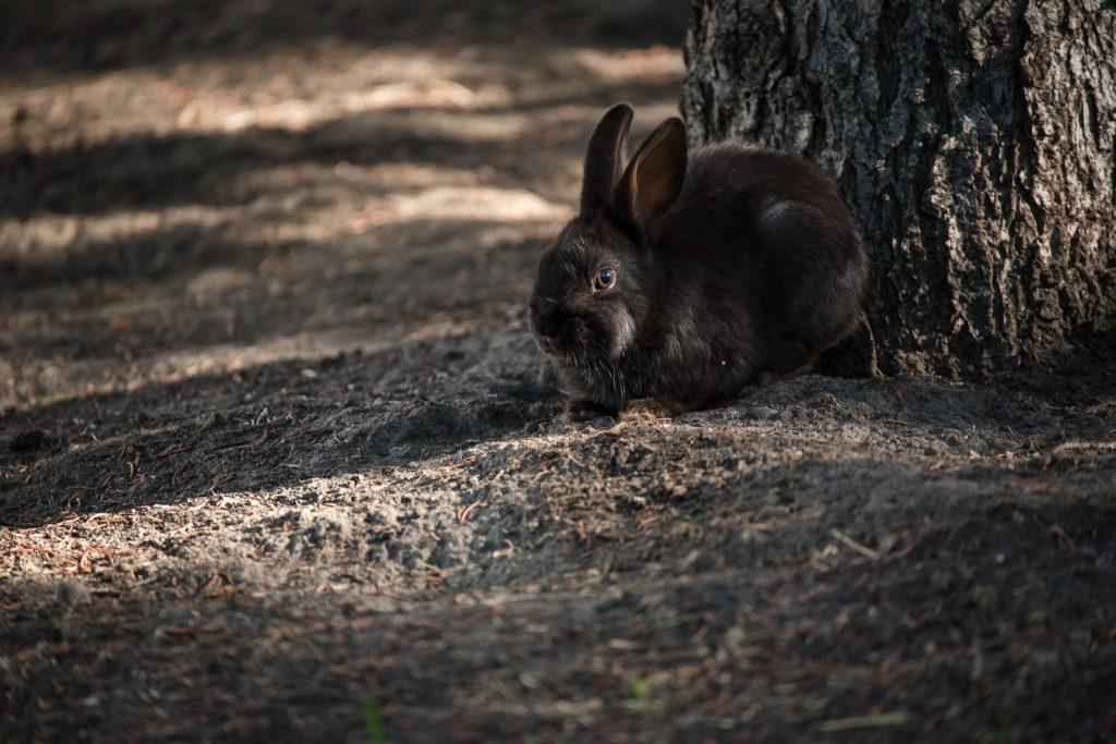 how to calm down a hyper rabbit