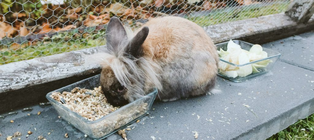 what to feed wild bunnies