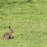 Why Is Wild Rabbit Sitting In One Place?