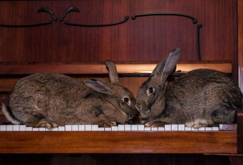 How Do Rabbits Fight