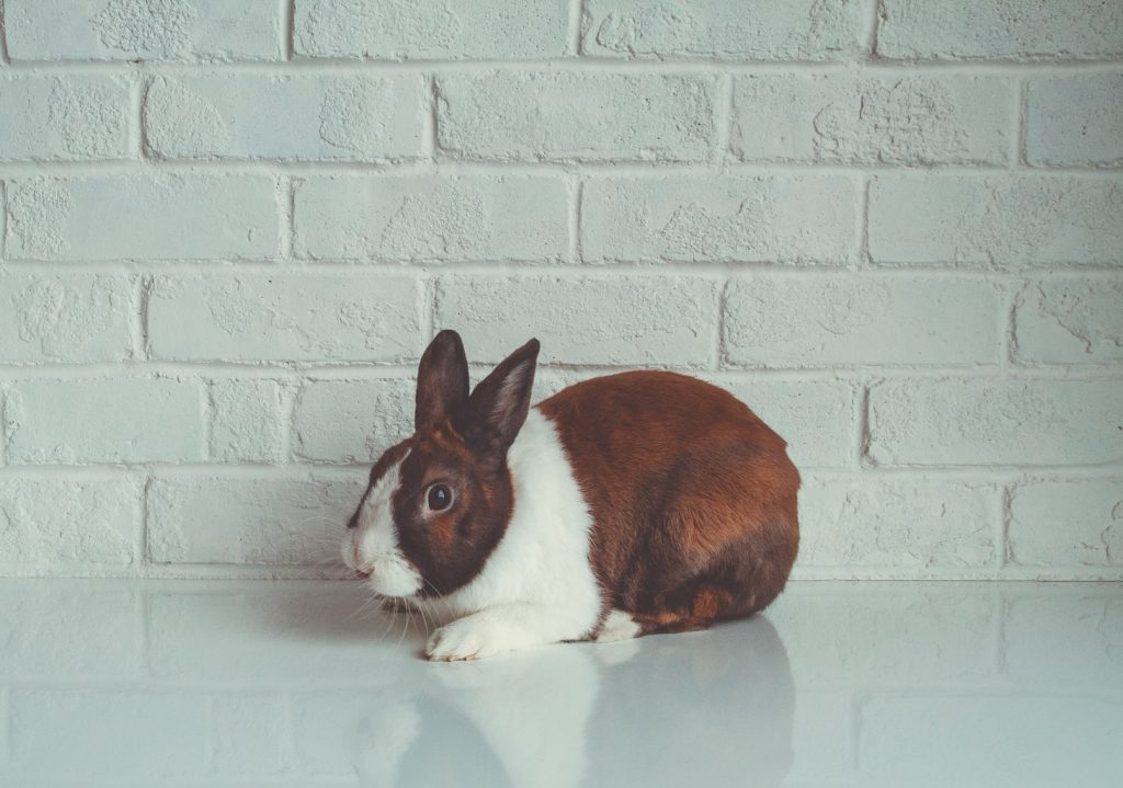 Are rabbits good luck