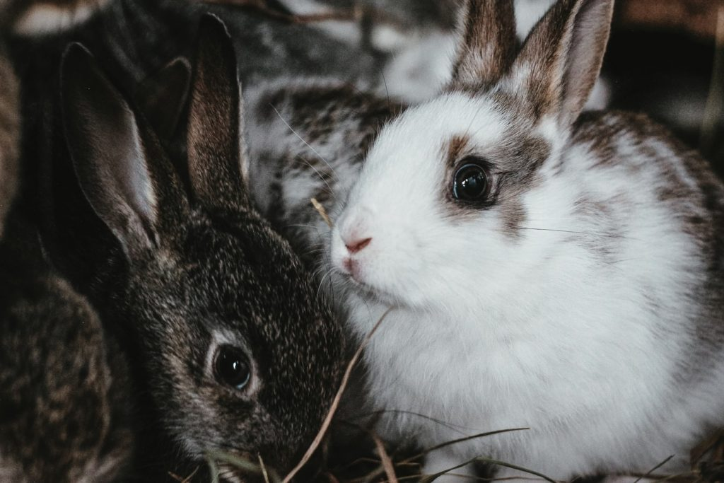 how to stop rabbit hiccups