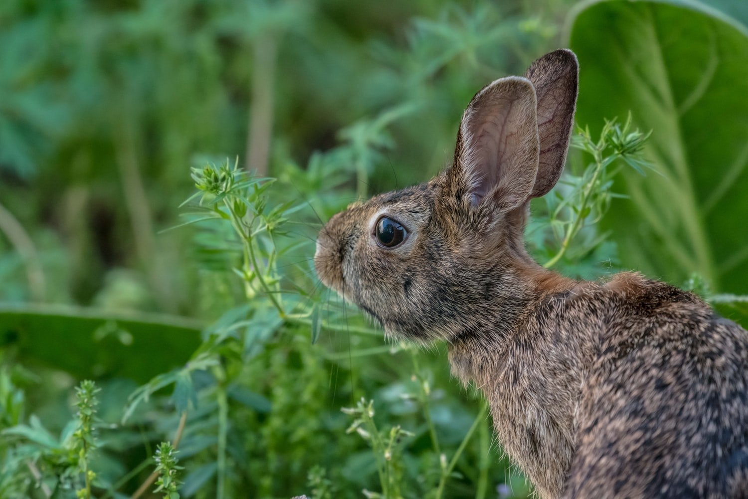 Do rabbits nest in the same place
