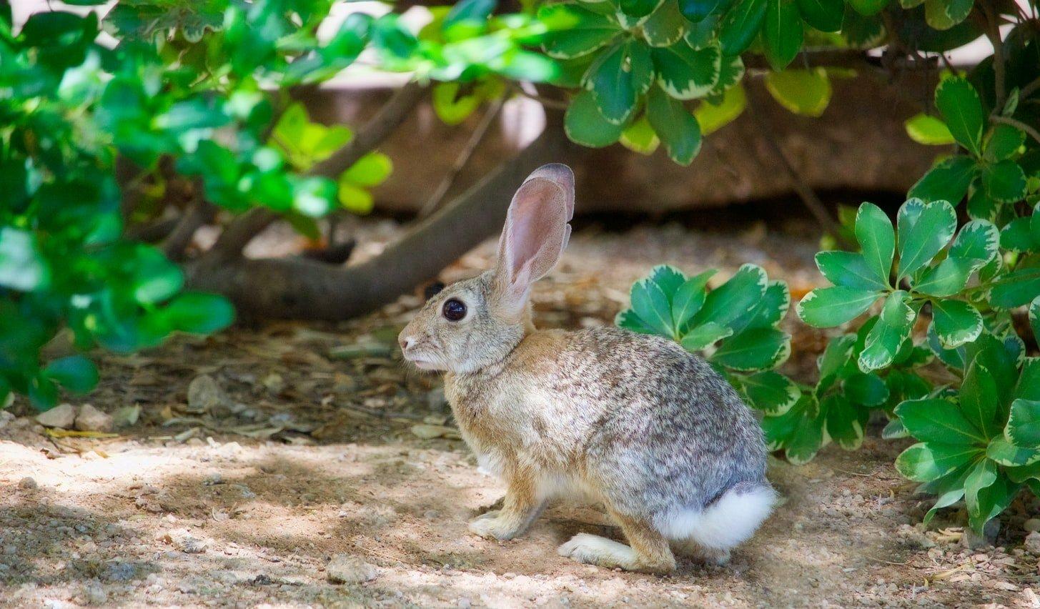 Do rabbits dream