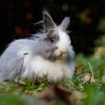 Do Rabbits Have Whiskers (And Why!)