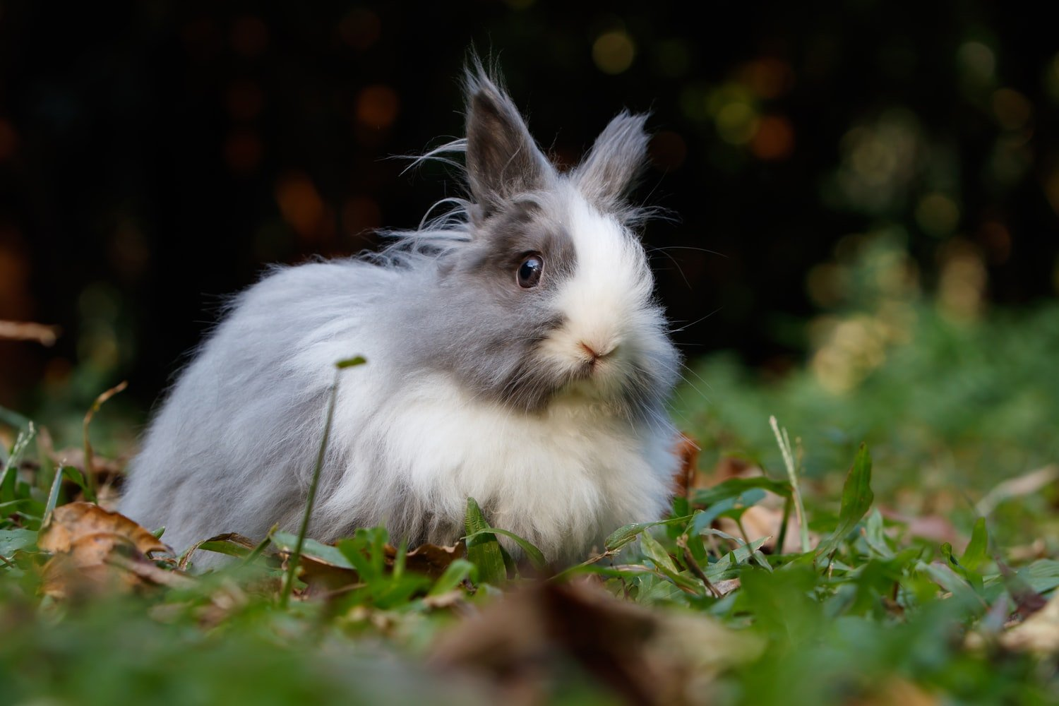 Do rabbits have whiskers
