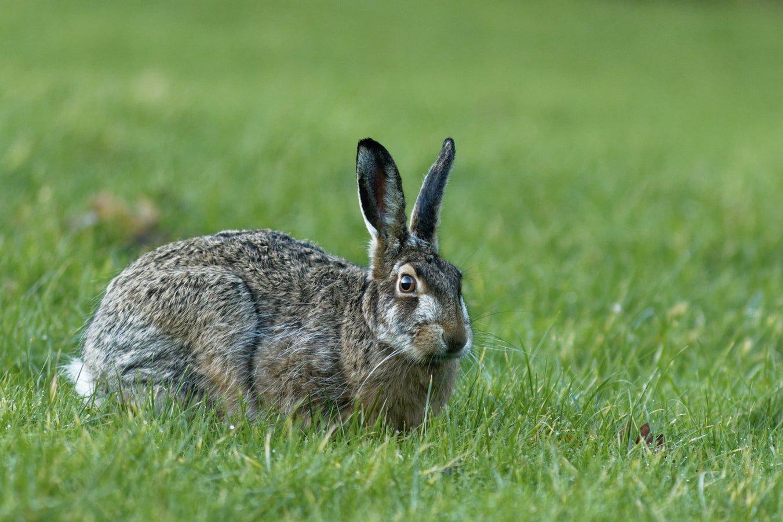 Can rabbits eat violets