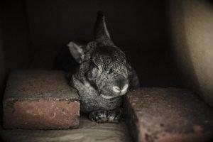 how to make a rabbit sleep at night