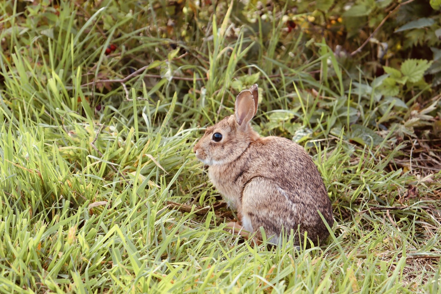 Why do rabbits have big feet