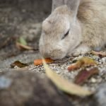 Do Rabbits Mate For Life?  (And Why!)