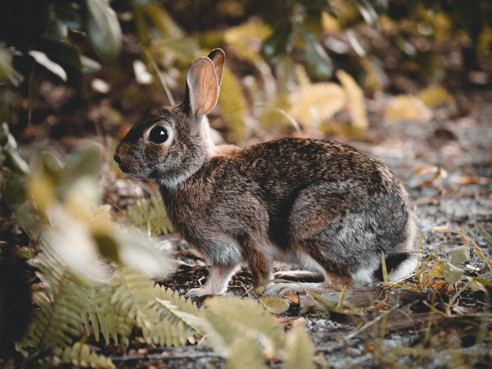 Can Rabbits Eat Dragon Fruit