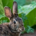What To Feed Wild Bunnies (And Why!)