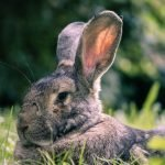 How To Stop Rabbits Chewing Wires (And What To Use!)