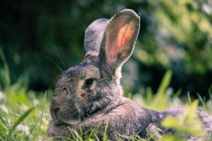 how to stop rabbits chewing wires