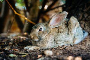 Can rabbits eat tea bags
