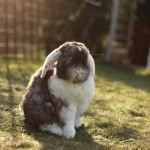 Can Rabbits Jump Over Fences?