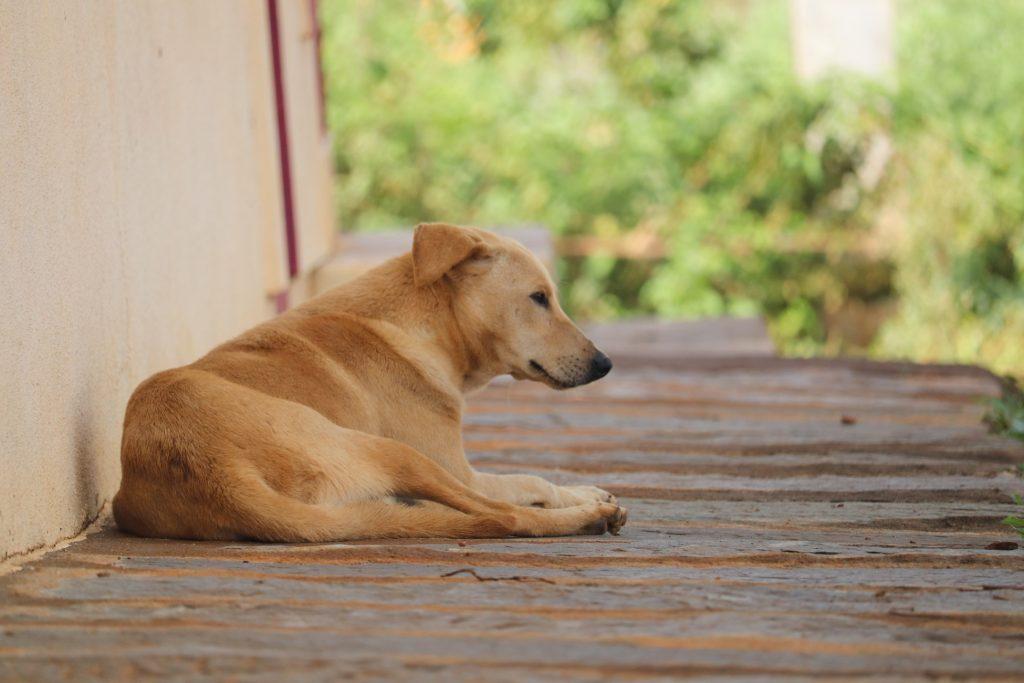 Can dogs ingest hydrogen peroxide