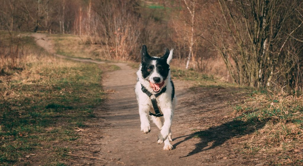 why does my dog throw up after exercise