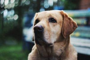 Does dog beer get dogs drunk