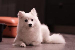do milk bones make dogs fat