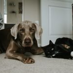 Why Does My Dog Nudge My Cat?