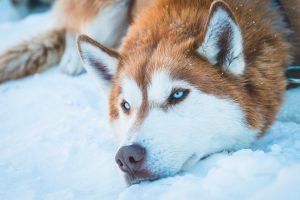 Can dogs eat poppadoms