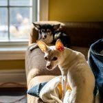 Why Do Female Dogs Chew Underwear?
