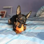 Why Does My Dog Mess Up My Bed? (And How To Stop It!)